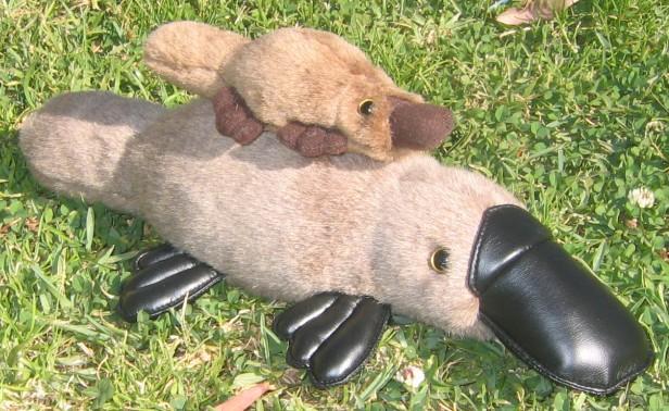 Утконос игрушка своими руками 43