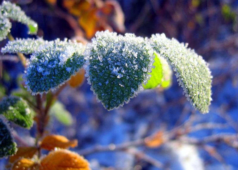 Природа, покрытая инеем. Фото
