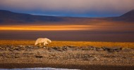 Острова Северного Ледовитого океана – суровый край для сильных людей