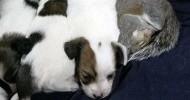 Необычный приемыш – американская собака усыновила бельчонка