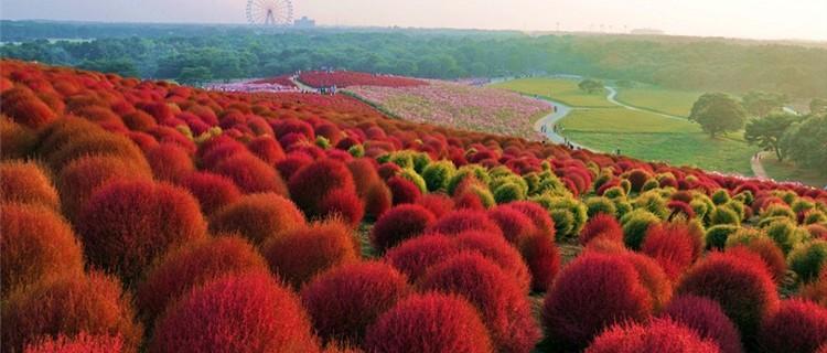 Парк Хитачи в Японии