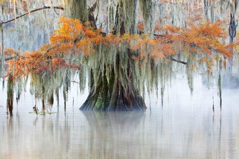 Октябрь и ноябрь на озере Каддо – удивительное время