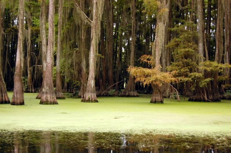 Загадочные пейзажи озера Каддо