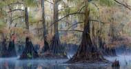 Кипарисовые леса озера Каддо (Техас, США) – сказочные пейзажи наяву