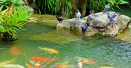 Сингапурский ботанический сад, фото и описание