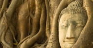 Голова Будды в дереве, Таиланд (9 фото)