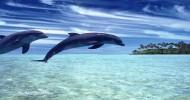 Дельфинов признали личностями!