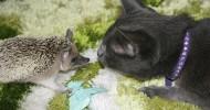 Знакомство котов с разными животными. Фото и видео