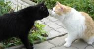 Кошачья любовь (28 фото)