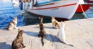 Необычные острова, оккупированные животными