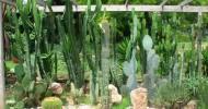 Ботанический сад Андре Хеллера — ФОТО