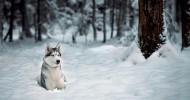 Животные в снегу (37 фото)