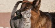 О дружбе котов и собак (+30 фото)