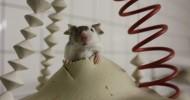Игровая зона для домашних мышек