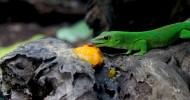 Уникальный животный мир Маврикия (22 фото)