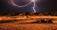 Национальный парк Хванге, Зимбабве.