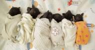 Центр реабилитации летучих мышей