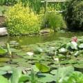 botanicheskiy_sad_padui.png