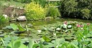 Ботанический сад в Падуе, Италия — ФОТО