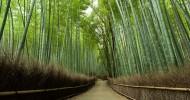 Бамбуковый лес Сагано в Киото, Япония (19 фото)