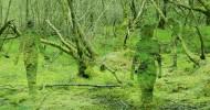 Стеклянные скульптуры в шотландском лесу (15 фото)