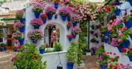 Фестиваль цветов в патио (г. Кордова, Испания). 30 фото