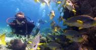 6 самых необычных в мире мест для дайвинга