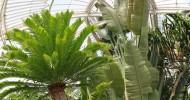 Удивительные теплицы мира: оранжереи в Садах Кью