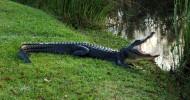 Национальный парк Эверглейдс (Флорида, США). 16 фото