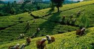 Sri Lanka — или как мы слегка задержались… ;) часть 3
