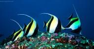 Самый большой из всех необитаемых  остров Кокос