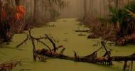 Страшные болота Манчак  в Луизиане