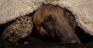 Удивительная дружба животных. Часть1 (38 фото)