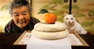 Фотоистория дружбы бабушки и кота. Часть 2
