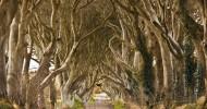 Таинственный лес, или Темная аллея в Ирландии — (15 фото)