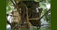 Необычный отель на дереве в Индии