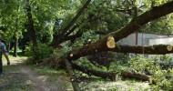 Деревовыкапывалка