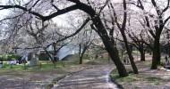 Парк Йойоги в Токио (фото)