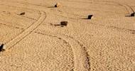 Долина движущихся камней, Калифорния (10 фото)