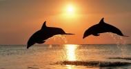 Дельфины и киты (видео)