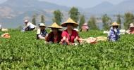 Чайный тур в Китай