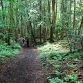 les-samoubiyts-aokigahara-dzyukay