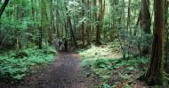 Лес самоубийц в Японии (16+)