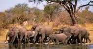 Прибежище африканских слонов