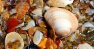 Фотографирование морских раковин