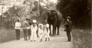 Первые слоны на Руси
