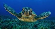 12 вещей, которые нужно сделать на Канарских островах