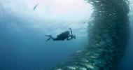 Море Кортеса – самый большой аквариум  в мире