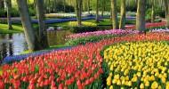 Парк Кекенхоф (Keukenhof) Нидерланды — ФОТО