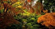 Осенний японский сад в Портленде, США (25 фото)